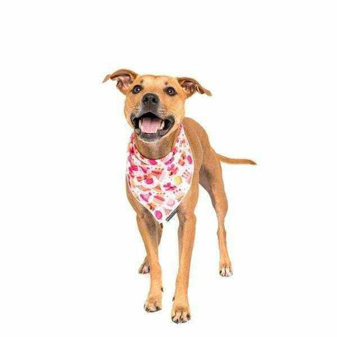 Big & Little Dogs Happy Bark Day Girl Bandana-DoggyTopia