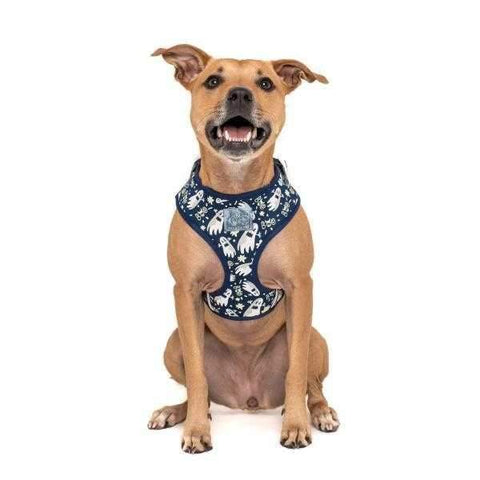 Big & Little Dogs HOWLOWEEN ADJUSTABLE HARNESS + LEASH SET: Spooktacular-DoggyTopia