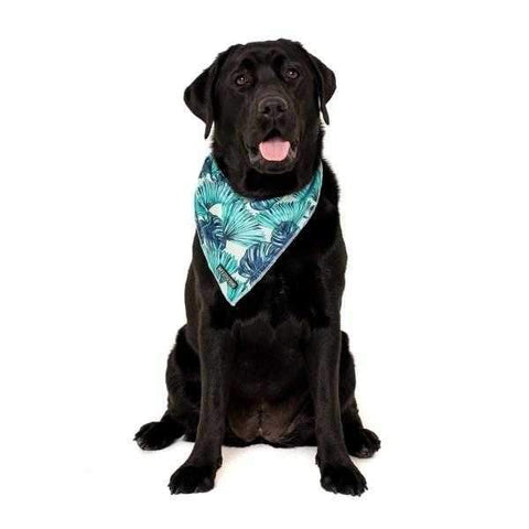 Big & Little Dogs Miami Summer Bandana-DoggyTopia