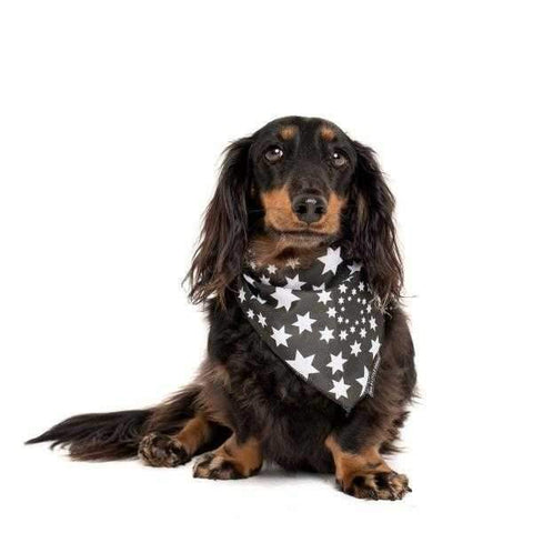 Big & Little Dogs Shoot For The Stars Bandana-DoggyTopia
