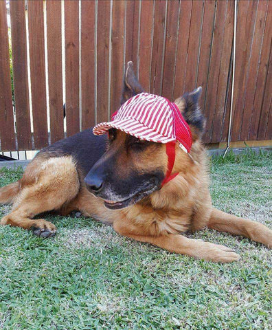Image of Dog Hat Red Stripe-DoggyTopia
