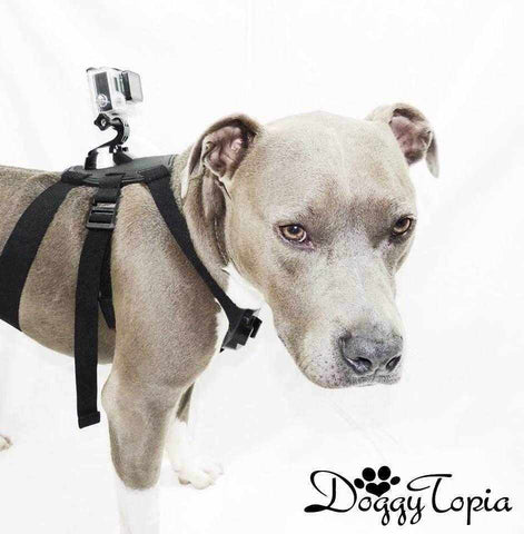 GoPro Adjustable Mounting Dog Harness-DoggyTopia