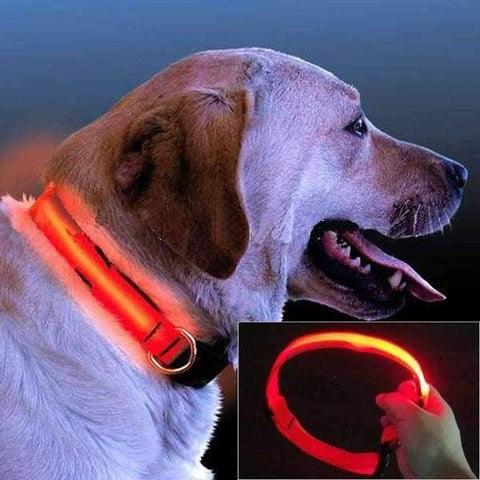 LED Nylon Dog Collar-DoggyTopia