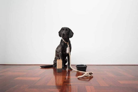 Image of Mog & Bone Leather Rope Lead - Natural-DoggyTopia