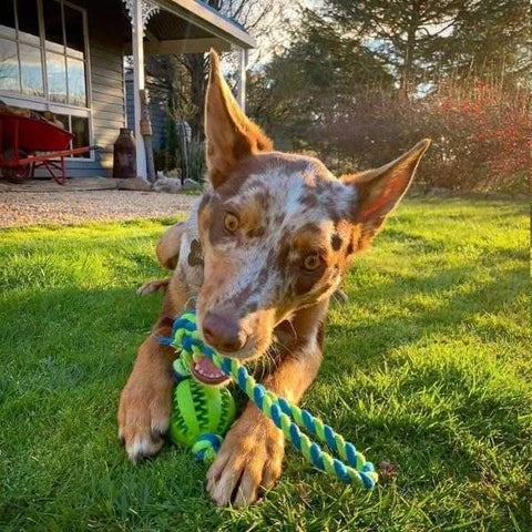 Image of Rubber Dental Treat Ball & Rope-DoggyTopia