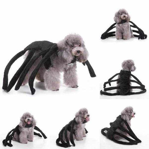 Image of Spider Dog Halloween Costume-DoggyTopia