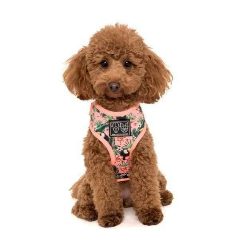 zzz Big & Little Dogs Troppo Toucan Adjustable Harness-DoggyTopia