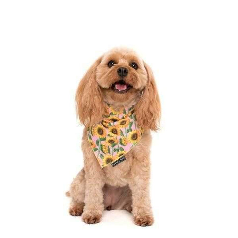 zzz Big & Little Dogs You Are My Sunshine Bandana-DoggyTopia