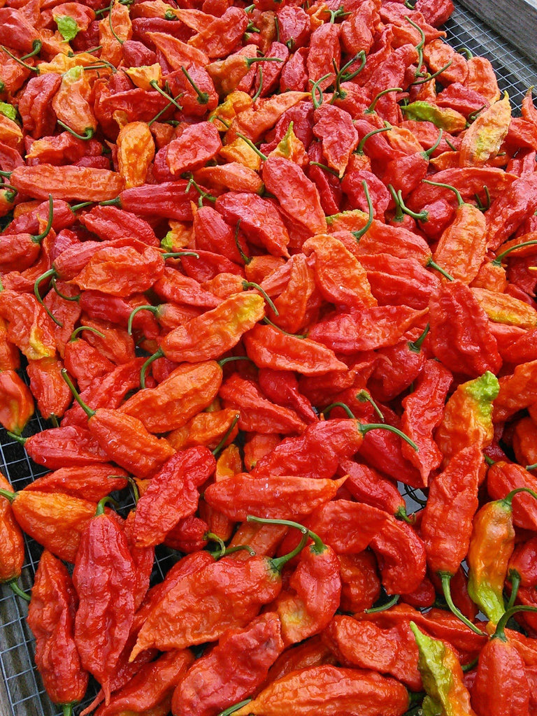 Ghost peppers - fresh | 8oz pack - shop the hottest peppers in the world online 24/7, Fresh peppers - ghost peppers worlds hottest pepper products, Ghostpepperfarms - ghostpepperfarms