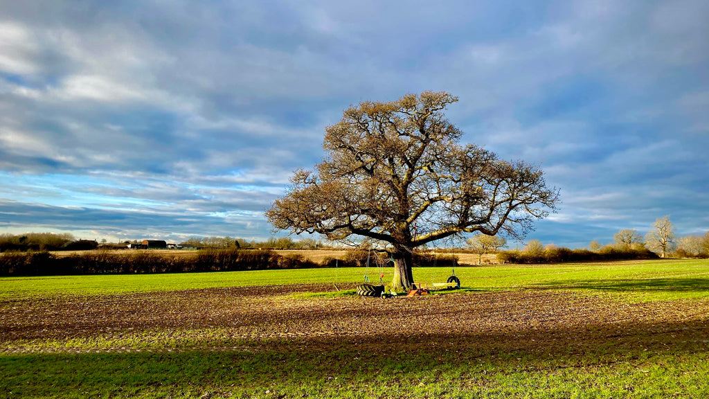 The Great Oak at Manor Barns | Christie Lloyd