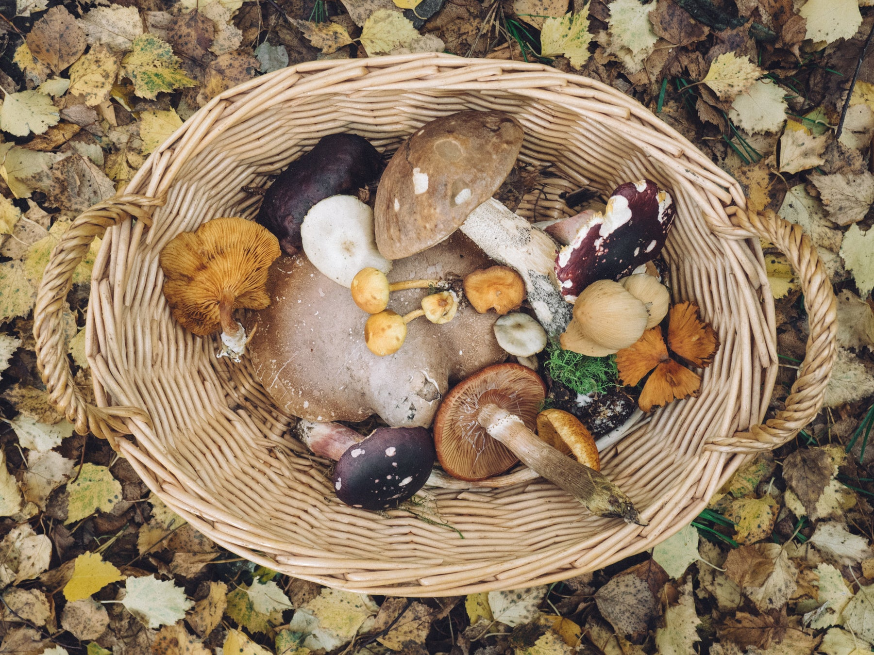 Medicinal Mushrooms And Their 'Magical' Benefits!