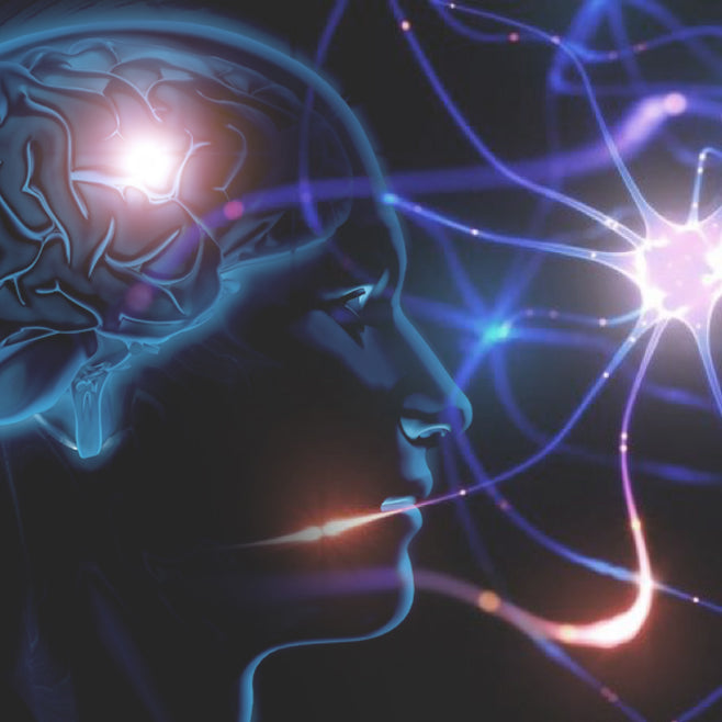 How To Effectively Increase Neurogenesis?