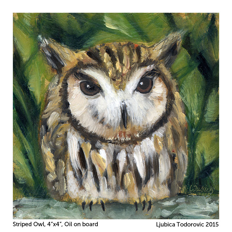 "Striped Owl (Print) 5""x5"""