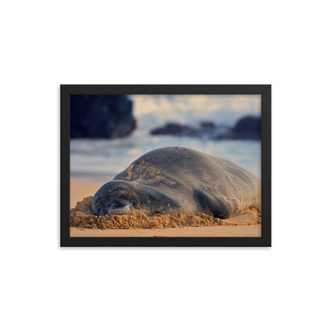 Sleeping Seal Print by Alex Wilson