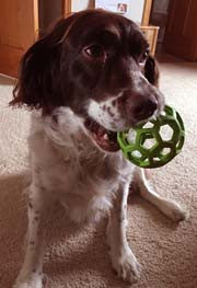 The New Craze in Dog Toys: The Pet Treat Ball