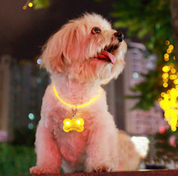 Pet Safety Flashing LED Bone Pendant Light - Wow Great Gifts