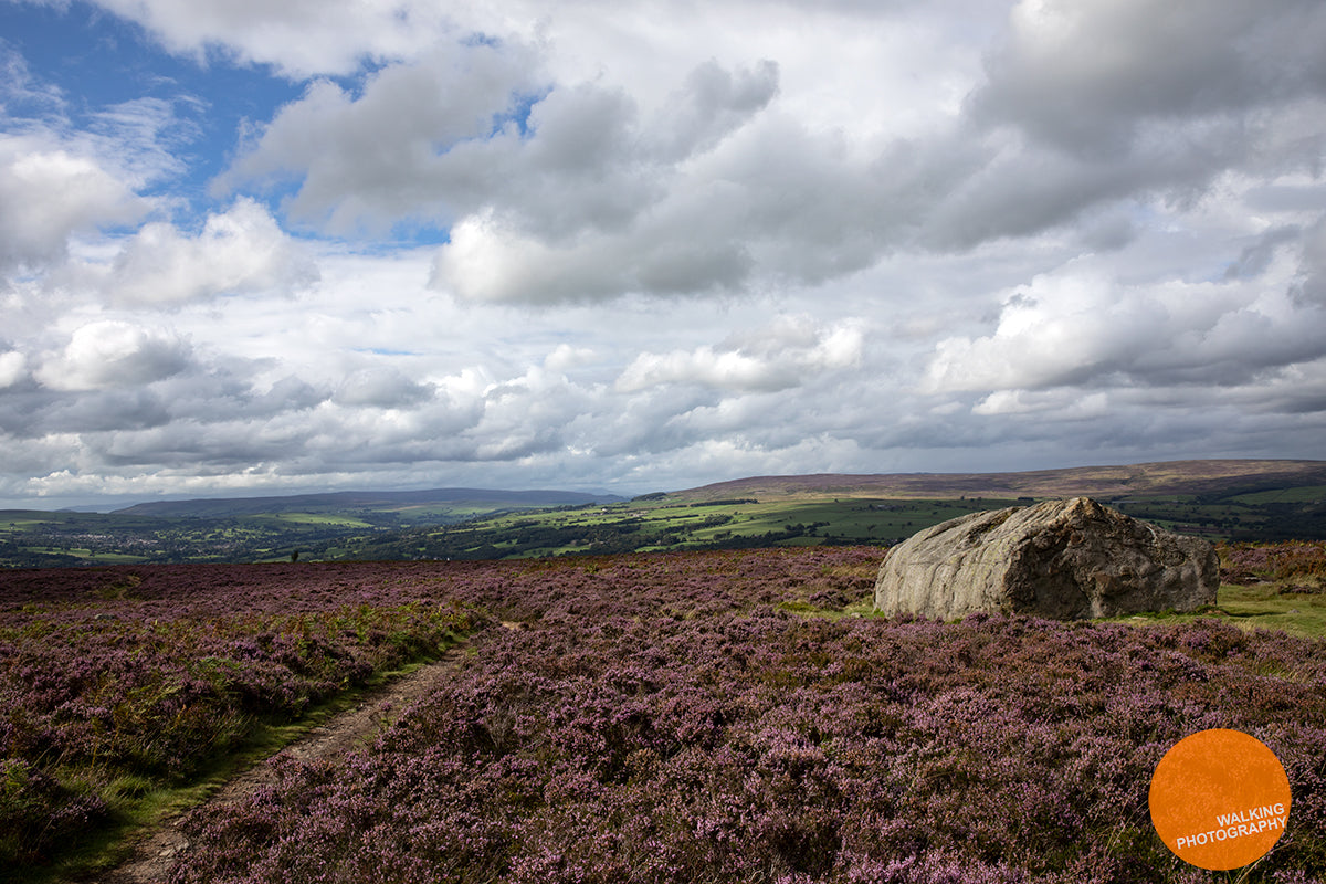 Stone with cup and ring marks on Ilkley Moor in the heather