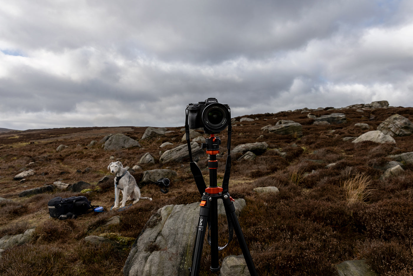 Sony A7rIV on tripod on moors with lurcher in the background