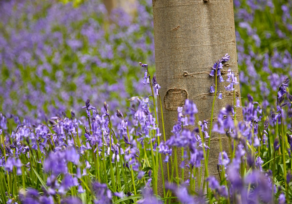 Bluebell Woods Photo Walk