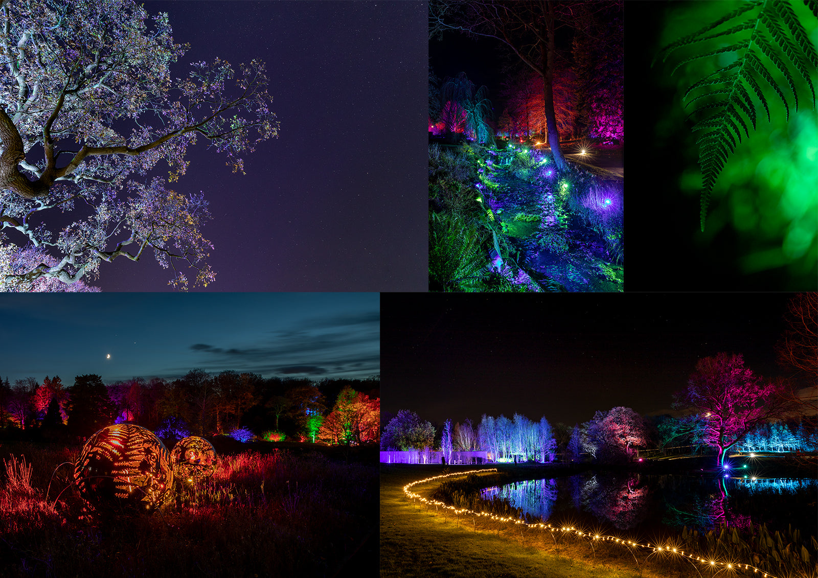 Night Photography at RHS Harlow Carr