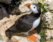 Bempton Cliffs Photo Walk