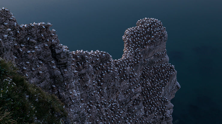 Bempton Cliffs Photo Walk Download