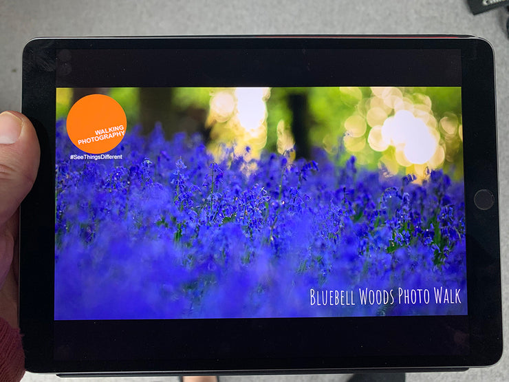 Bluebell Photo Walk Download
