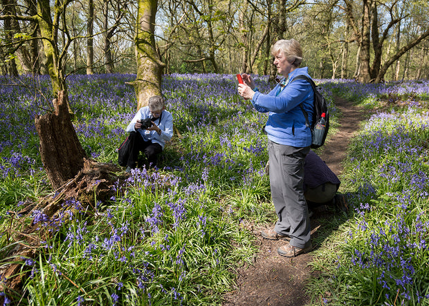 Bluebell Woods Photo Walk Voucher