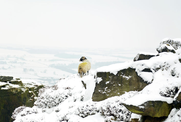 Draped in White, Ilkley Moor