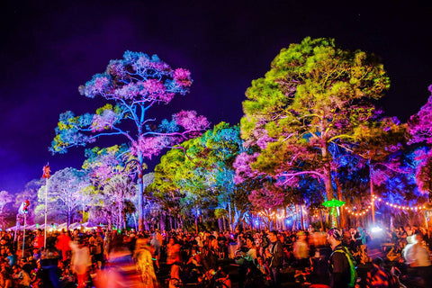 okeechobee music festival lighting trees