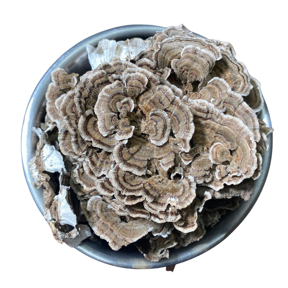 Dried Turkey Tail - Bulk Mushrooms - Birch Boys