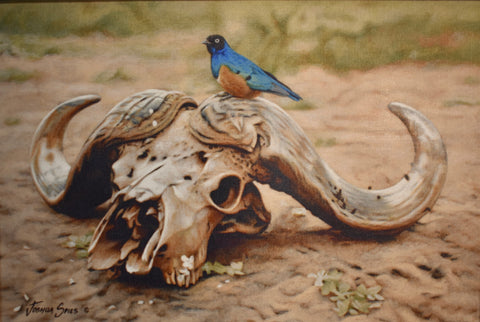 Cape Buffalo Skull with Bird