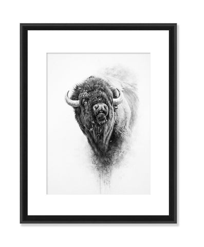 Bison II - Original Charcoal Painting Matted and Framed