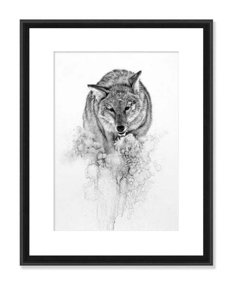 Coyote in Snow - Original Charcoal Painting Matted and Framed