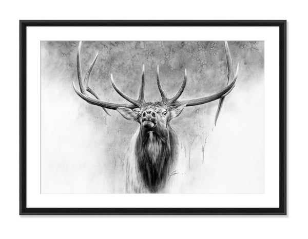 Elk - Original Charcoal Painting Matted and Framed