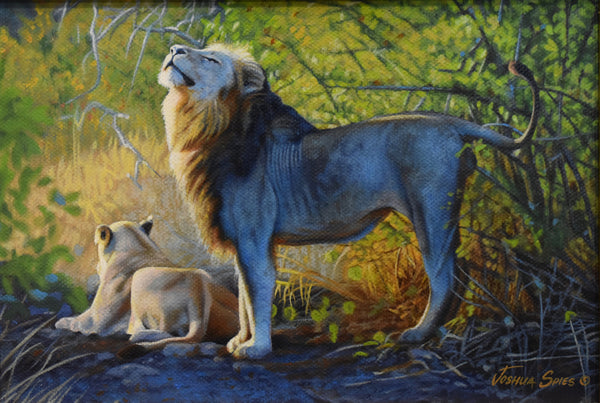"Lion Pair ""A Place In The Sun"""