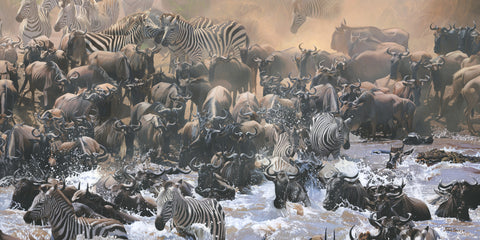Mara River Migration