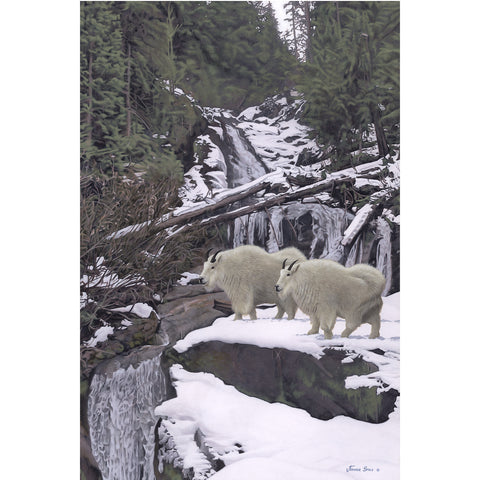 Monashee Mountain Goats