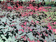 Reversible Velvet Sequins Hot Pink / Iridescent Pink 2 Way Stretch Shiny Sequins Fabric Black Velvet