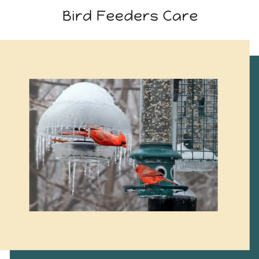 Bird Feeders Care