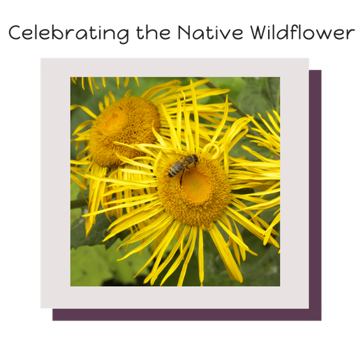 Celebrating the Native Wildflower