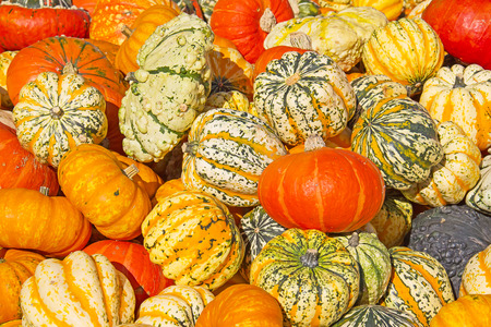 Colorful pumpkins collection on the autumn market_ Fedor Selivanov.png
