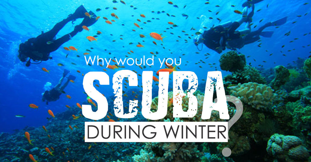 Why Would You Scuba In Winter?