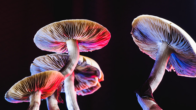Man Injected Psilocybin Tea, Then Nearly Died After Shrooms Started Growing in His Body