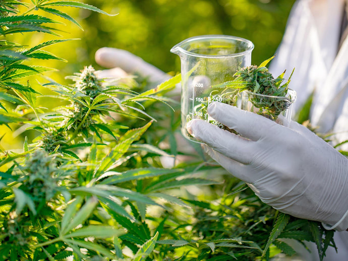 Federal Health Agency Is About to Host Symposium on Cannabis and Cancer Research
