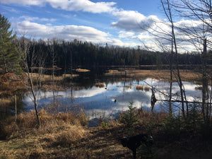 Yoga Nature walk & Pick Nick 7 April 2018 Laurentian Montain - Yoga Vedanta