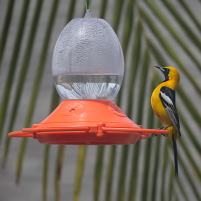 Complete Outdoor Oriole Feeder Kit with Nectar, Ant Guard and Cleaning Bush