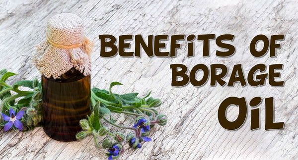 BORAGE OIL AND ITS USES