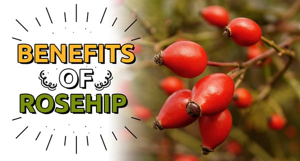 BENEFITS OF ROSEHIP