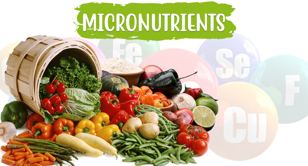 Micronutrients for a Healthy You